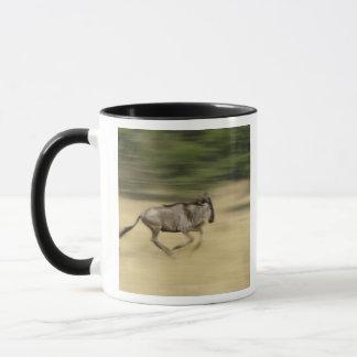 Wildebeest in motion, Connochaetes taurinus, Mug