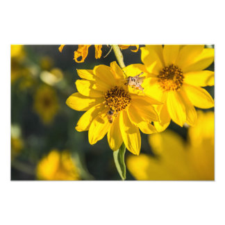 Wildflower and bee photo print