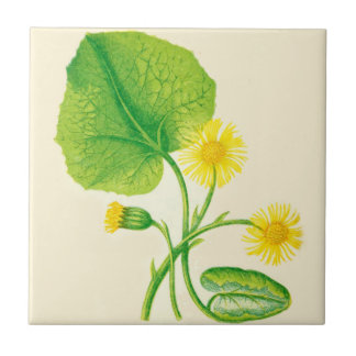 Wildflower Ceramic Kitchen Tile Coltsfoot