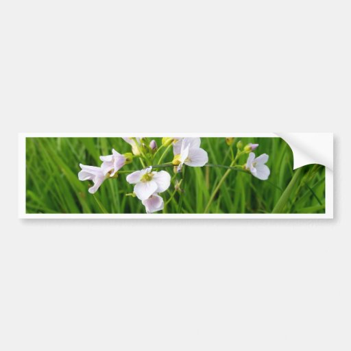 Wildflower delight bumper sticker
