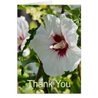 Wildflower Hibiscus, Thank You Card