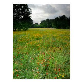 Wildflower Meadow - Butler Trail - Austin Texas Postcard