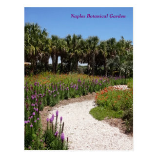 Wildflower Meadow Naples Botanical Garden Florida Postcard