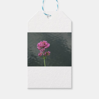 Wildflowers against the water surface of a river gift tags