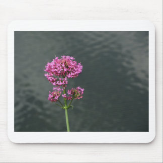 Wildflowers against the water surface of a river mouse pad
