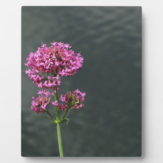 Wildflowers against the water surface of a river plaque