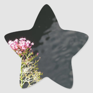 Wildflowers against the water surface of a river star sticker