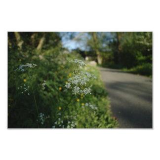 Wildflowers And Path Photo Print