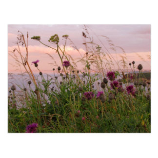 Wildflowers at Dusk Postcard