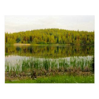 Wildflowers, Bullrushes Marshall Lake Postcard