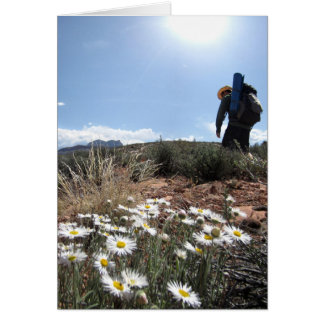 Wildflowers - Grand Canyon - Thunder River Trail Card