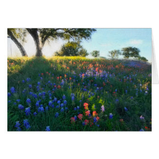 Wildflowers in Evening Light Card