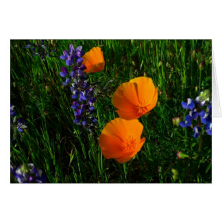 Wildflowers in Sonoma County Card
