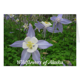 Wildflowers of Alaska-Columbine (Aquilegiacan) Card