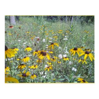 Wildflowers On The Prairie  - Postcard