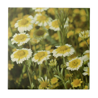 Wildflowers Yellow and White Sunflowers Tile