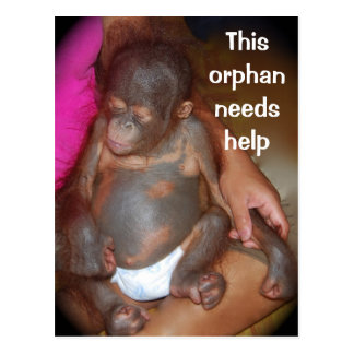 Wildlife Baby orphan - cute baby in Borneo Postcard