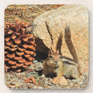 Wildlife coasters, wild animals, chipmunk coaster