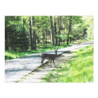 wildlife in the smokies #72 postcard