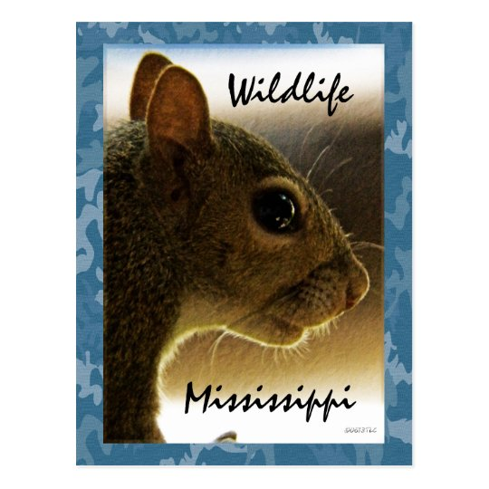 Wildlife Mississippi Grey Squirrel Postcard
