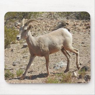 Wildlife mousepad, wild animals, mountain goat mouse pad