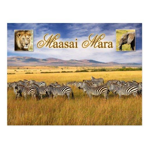 Wildlife of Maasai Mara in Kenya Post Card