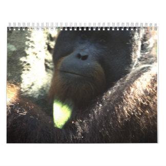 Wildlife Photography 2011 Wall Calendar