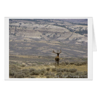 Wildlife Photography Note Card Design 1