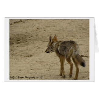 Wildlife Photography Note Card Design 3