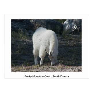 Wildlife Post Card