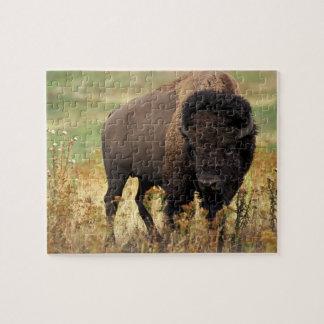 Wildlife Puzzle-Buffalo Jigsaw Puzzle