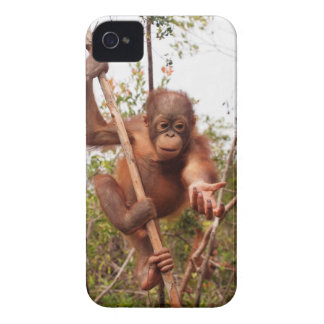 Wildlife Rescue Mason Orangutan iPhone 4 Case-Mate Case