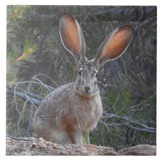 Wildlife tile, ceramic, rabbits, jackrabbit tile