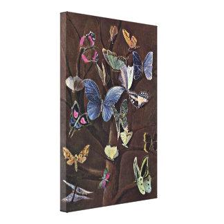 Wilhelm von Kaulbach - Butterflies Canvas Print