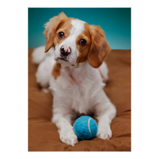 Will you play ball with me? poster