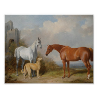 William Barraud A Grey And a Chestnut Hunter With Poster