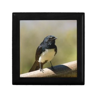 Willie Wagtail Gift Box