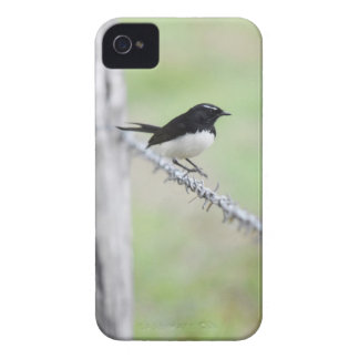 WILLIE WAGTAIL QUEENSLAND AUSTRALIA Case-Mate iPhone 4 CASES