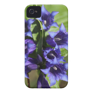 Willow gentian (Gentiana asclepiadea) iPhone 4 Covers