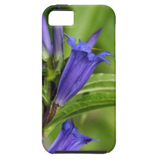 Willow gentian (Gentiana asclepiadea) iPhone 5 Case