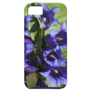 Willow gentian (Gentiana asclepiadea) iPhone 5 Cover