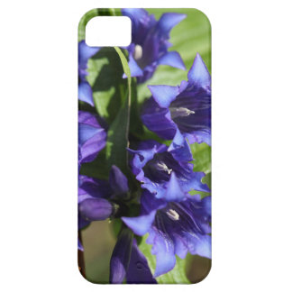 Willow gentian (Gentiana asclepiadea) iPhone 5 Covers