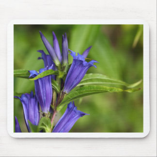 Willow gentian (Gentiana asclepiadea) Mouse Pad