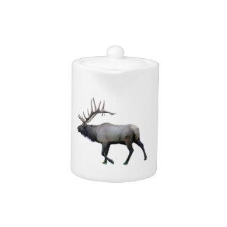 Willow Wapiti elk