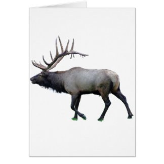 Willow Wapiti elk Card