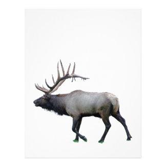 Willow Wapiti elk Letterhead