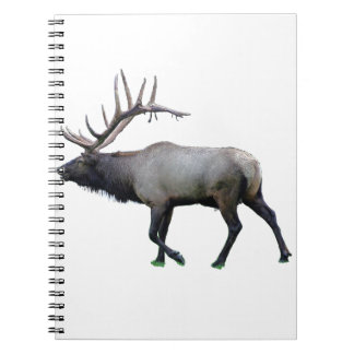Willow Wapiti elk Notebooks