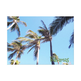 Wind in Palm Trees Canvas Print