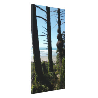 Wind Swept Seaside Trees Scenic View Canvas Print