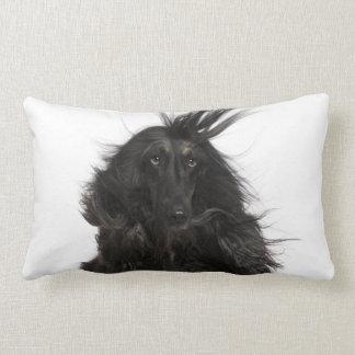 Windblown Afghan Hound Lumbar Pillow